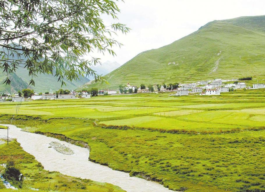 当雄县人工种草与天然草场改良建设项目